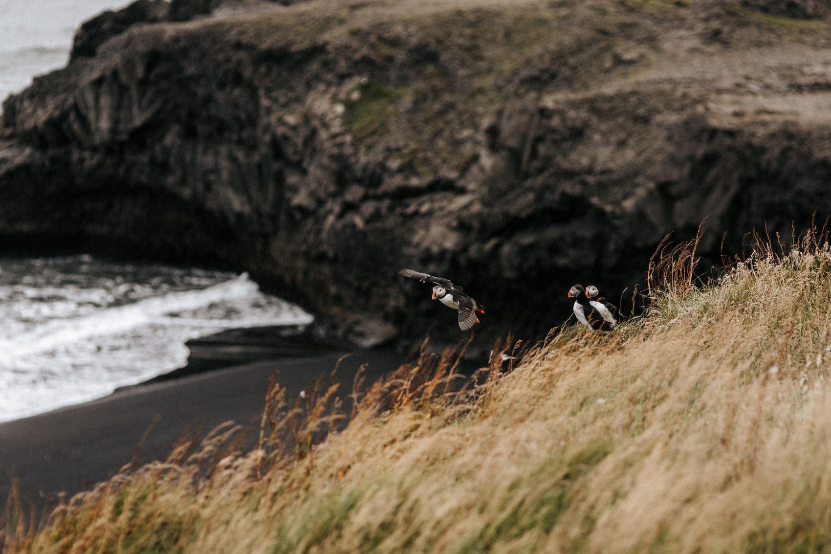 Fabien_Courmont_Iceland_Love_Session-17.jpg