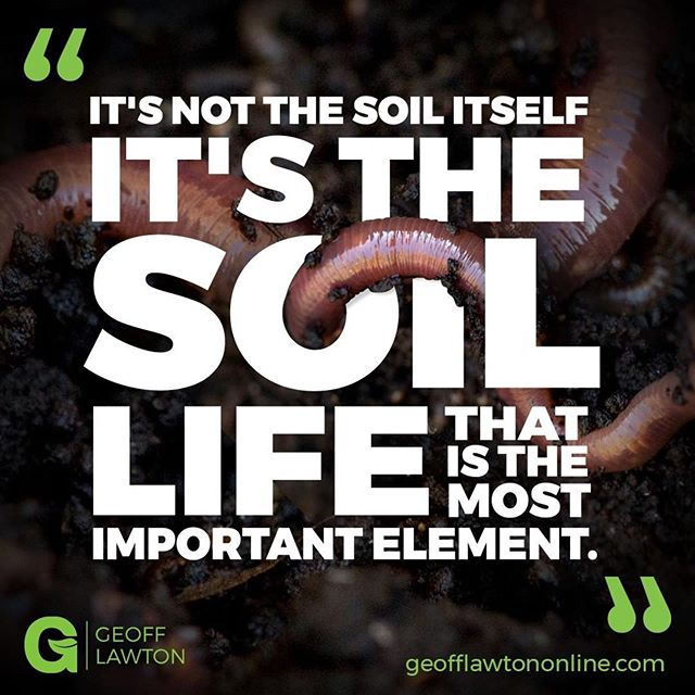 All life on Earth depends on it. All deliciousness on earth depends on it. All good thoughts depend on it. . #Repost @geofflawtononline ・・・ It's not the soil itself – it's the soil life that is the most important element ... 🔬 #soillife #soils #permaculture #permaculturedesign #permaculturemasterclass #permacultura #permacultureskills #permaculturedesigncertificate #permaculturedesigncourse #nature #agriculture #organic #growyourown #regenerativeagriculture #harvestwater #buildsoil #sustainableliving #agroforestry #ecosystem #permaculturewillfeedtheworld