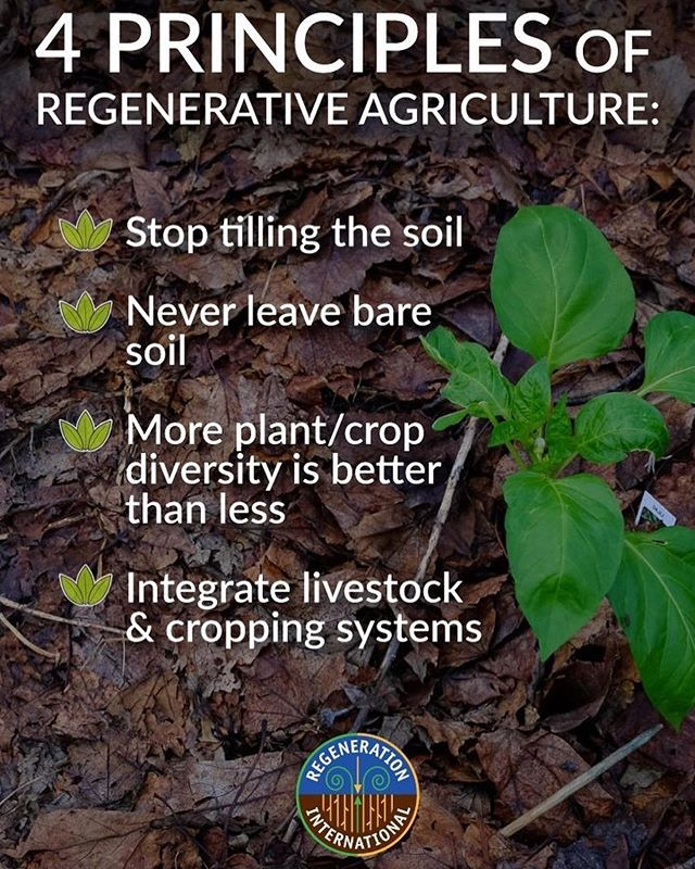 "#Repost @regenerationinternational ・・・ ""A new movement has started from the grass roots to challenge the way that we think about farming. In key ways Regenerative Agriculture pairs what we have learned from the past two phases of farming into a single resilient and profitable system. It is called Regenerative Agriculture, and it is the future of food production."" . . . #regenerativeagriculture #regenerativefarming #regeneration #agriculture #soil #bacteria #health"
