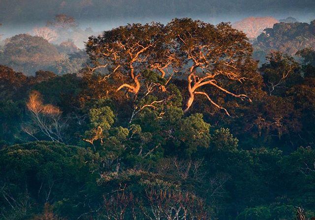🙏🏼🌿🌳👁☁️💧🌊🙏🏼 . #Repost @araquemoficial ・・・ A floresta que faz chuva e rega o chão. Amazônia, pátria da água . . . #agua #amazonia #amazonas #amazon #watercycle #protectorsofthenaturalworld #indigenous #brasil #brazil