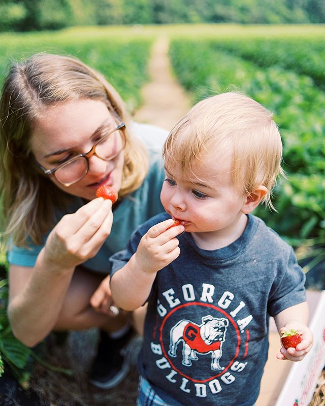 Strawberry picking is serious (...ly cute) business for Danny boy!