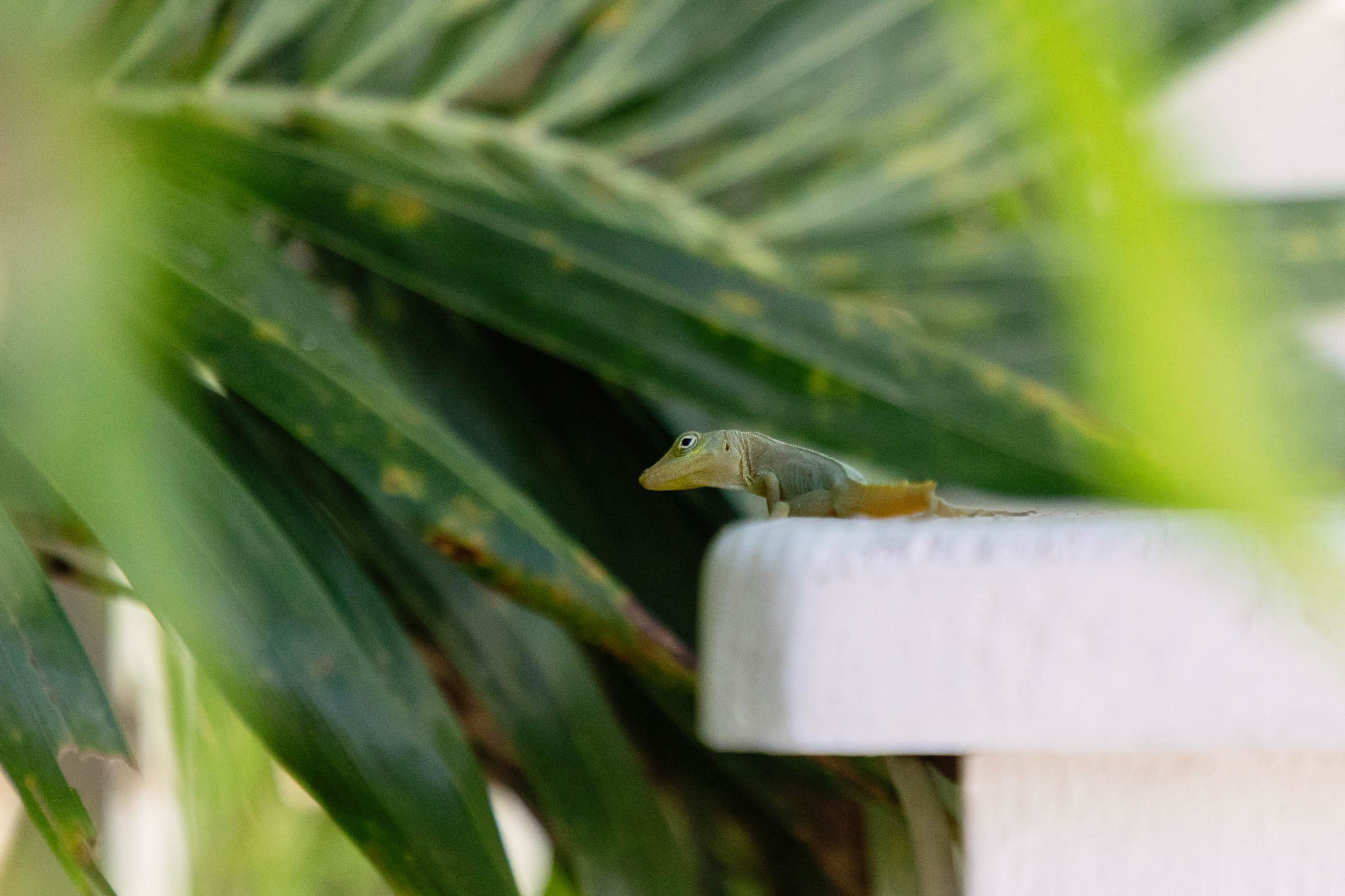 This lizard greeted us on our way out. I remember when I used to pull off lizards' tails when I was a little girl. I was such a tomboy. And then I'd be amazed when I would see the same lizard a couple days later with a new tail stub.