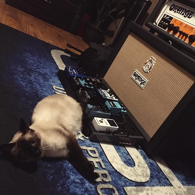 Meet our resident sound engineer, Moogulus. #siamese #cat #orange #amps #earthquakerdevices #templeaudio #templeboard #boss #fulltone #tcelectronic #voodoolab #ebssweeden #meris #cleantone #catsonamps