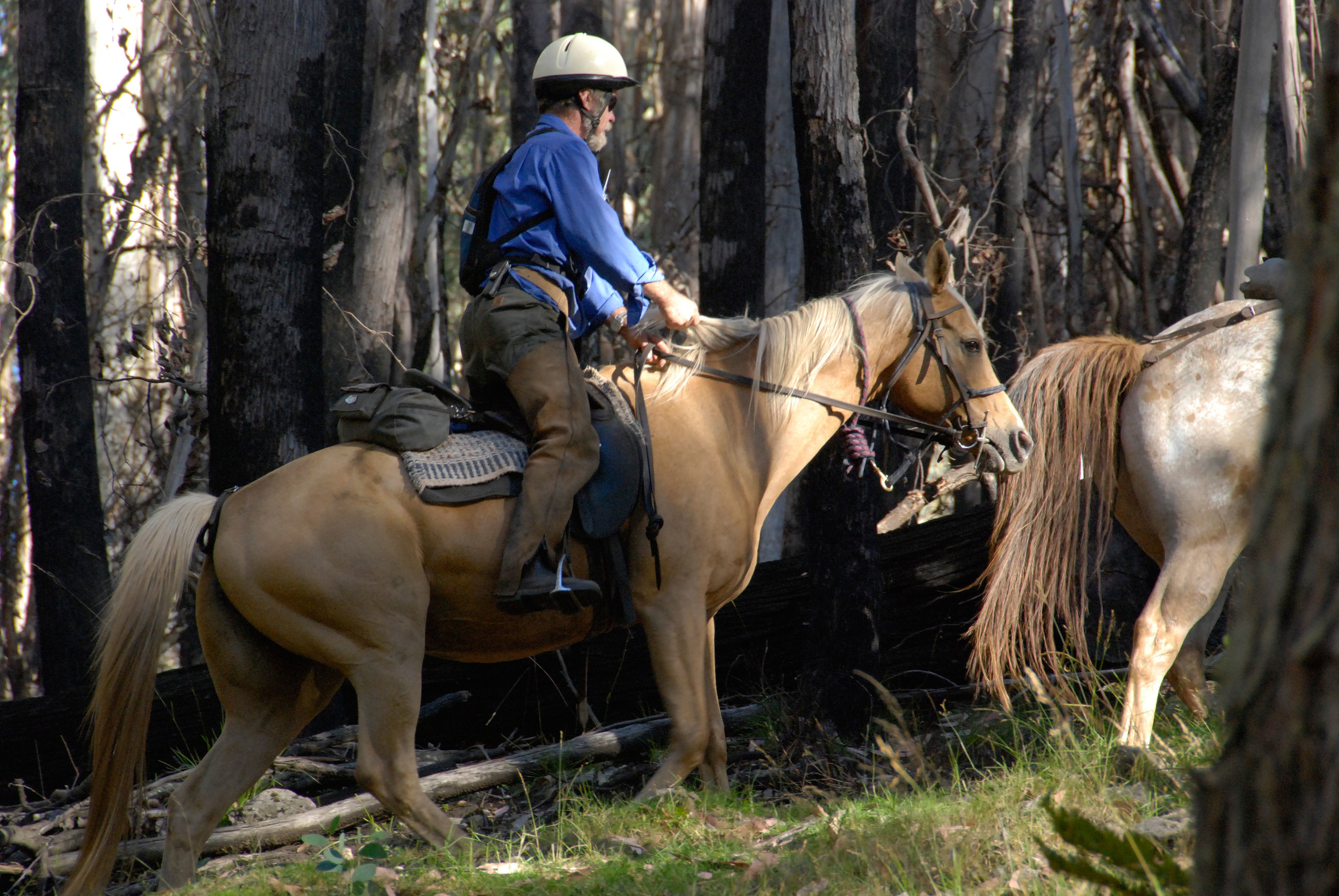 2 Hour and Half Day Rides - Please note that these rides are subject to our availability as we are frequently away in the mountains.Bookings should be made via phone 03 5777 5590  Age and weight restrictions apply.Leaving from Merrijig Lodge, with a horse matched to your ability, if you are an inexperienced rider, we teach you how to trot and canter (there is always plenty of staff to help) or you can just walk along and enjoy the view.Upon entering the forest you wind your way down to the Buttercup Creek through the Peppermint Gums and Candle Barks, you may observe a wallaby dash off through the bush or catch a glimpse of the elusive deer.As we cross the creek your horse navigates its way over the stoney rock floor. Once out of the stream you are on the open plain of the Deadwood forest with its gentle upward slope to the highest point.Now the fun really begins. Your decision, to join the group who want a leisurely walk, or the buzz of a canter to the top.At the top, while your horse takes a well-earned rest and you catch your breath, you see the mountains of the high country made famous in the film 'Man from Snowy River II' staring down on you, Buller, Stirling, Mt No. 3, the Pinnacle, Razorback, this is the real high countryIt now a leisurely walk back. As you enter the gate to the homestead it seems time has slipped away, you have experienced