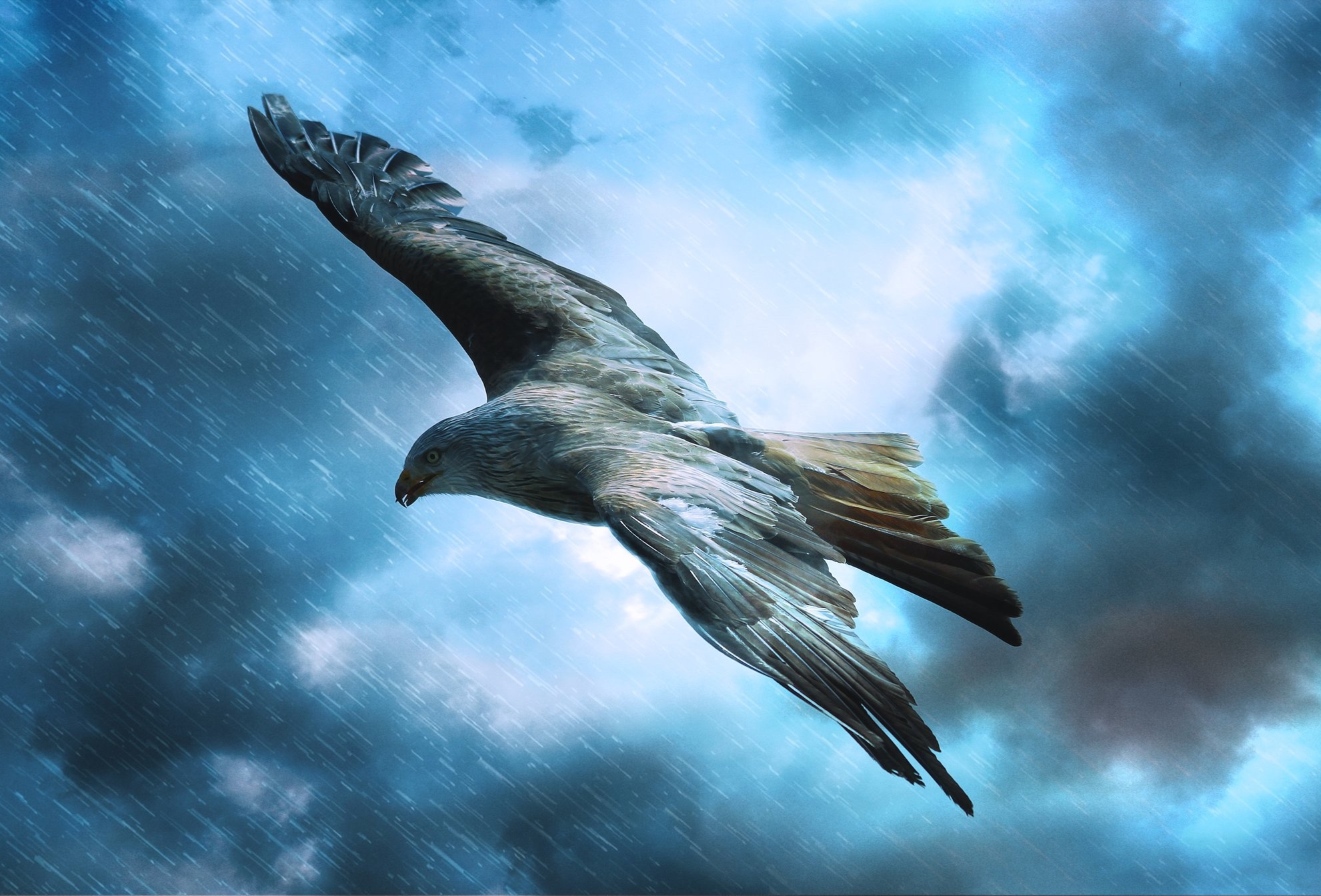 Bird+Storm.jpg