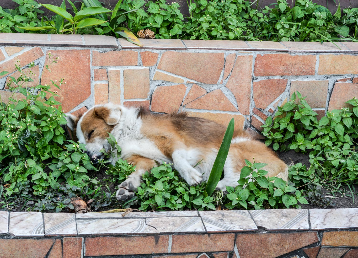 Napping in someone's garden