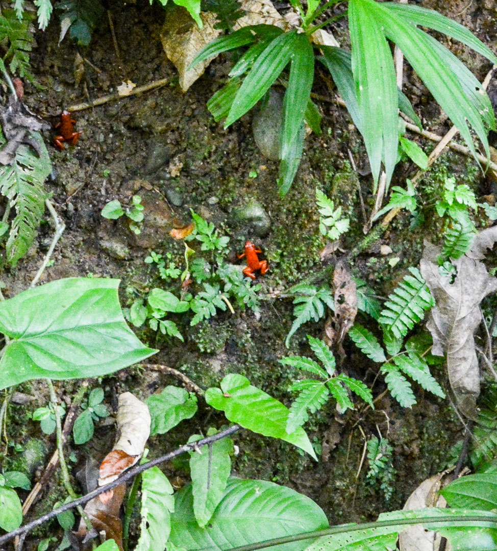 The tiny red frogs! There are actually 2 of them in this photo...