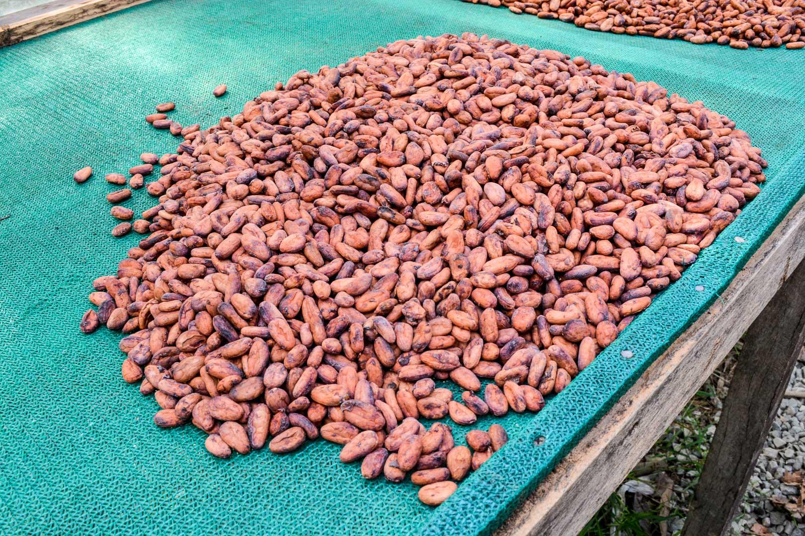 Sundried beans