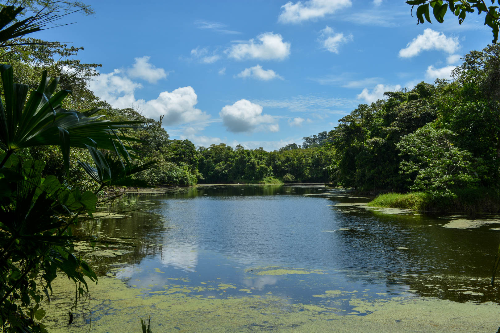 Not Arenal Lake, but a pond we came across on our hike