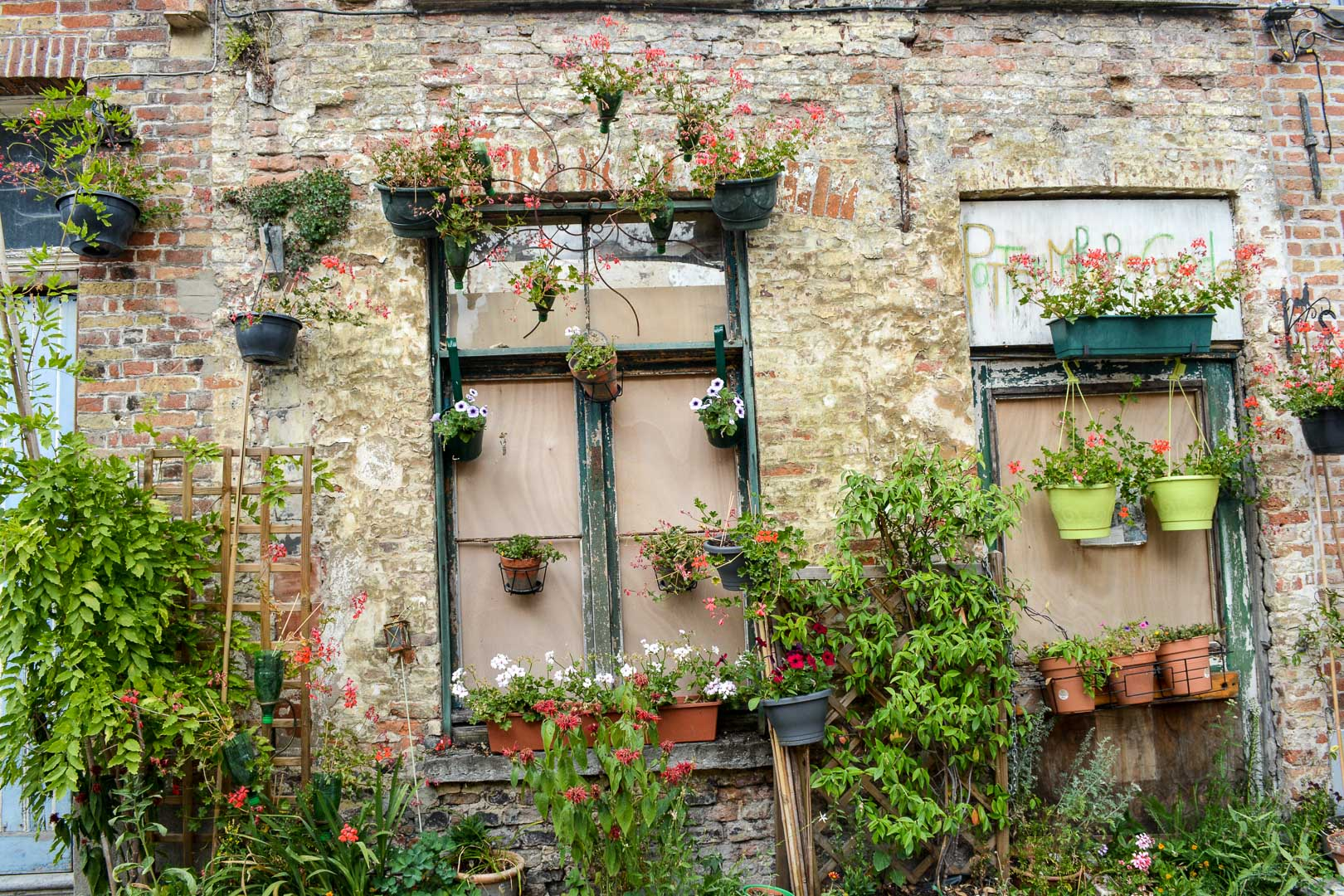 An abandoned house re purposed into an urban potted garden