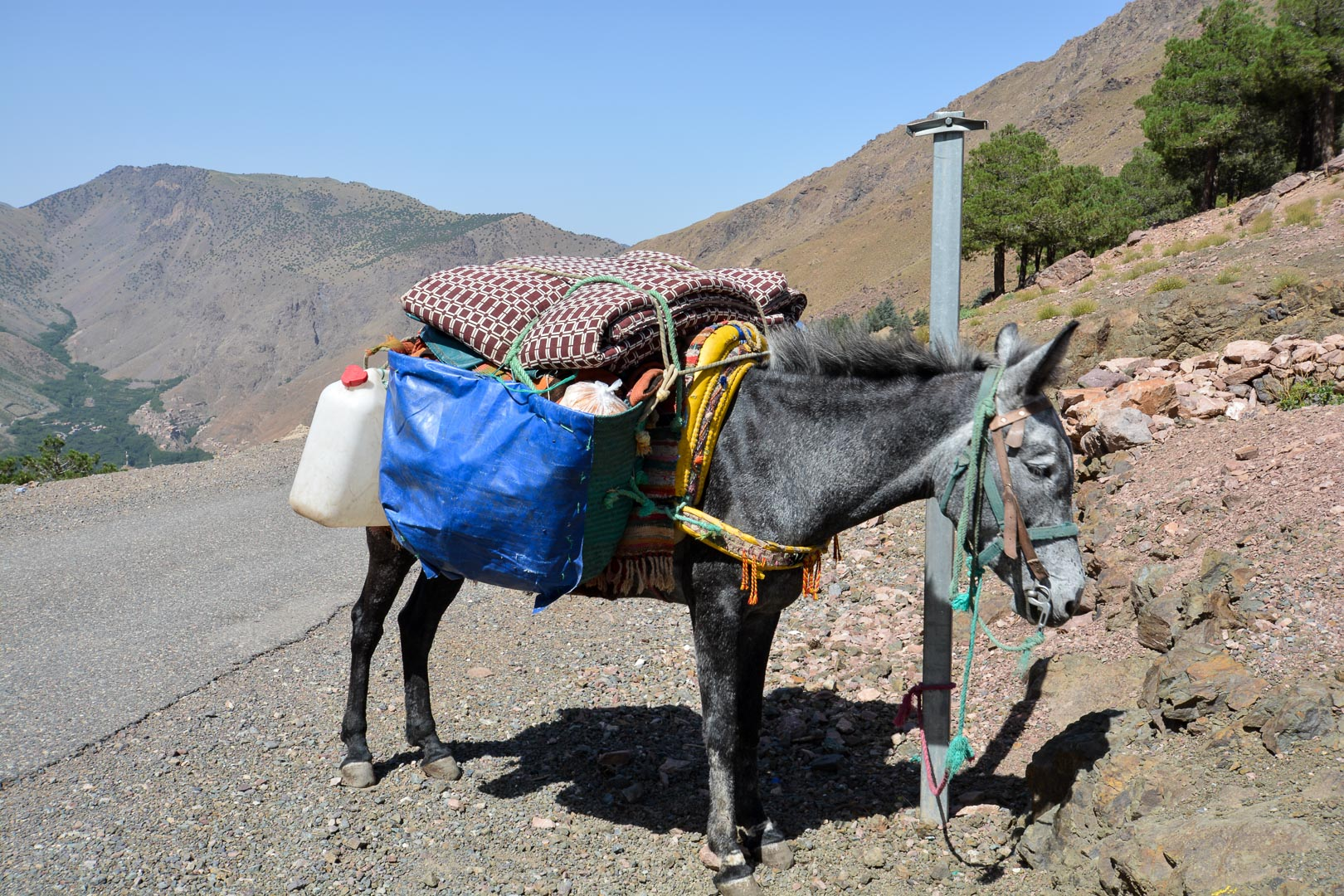 Mule carrying Mohommad's cooking supplies