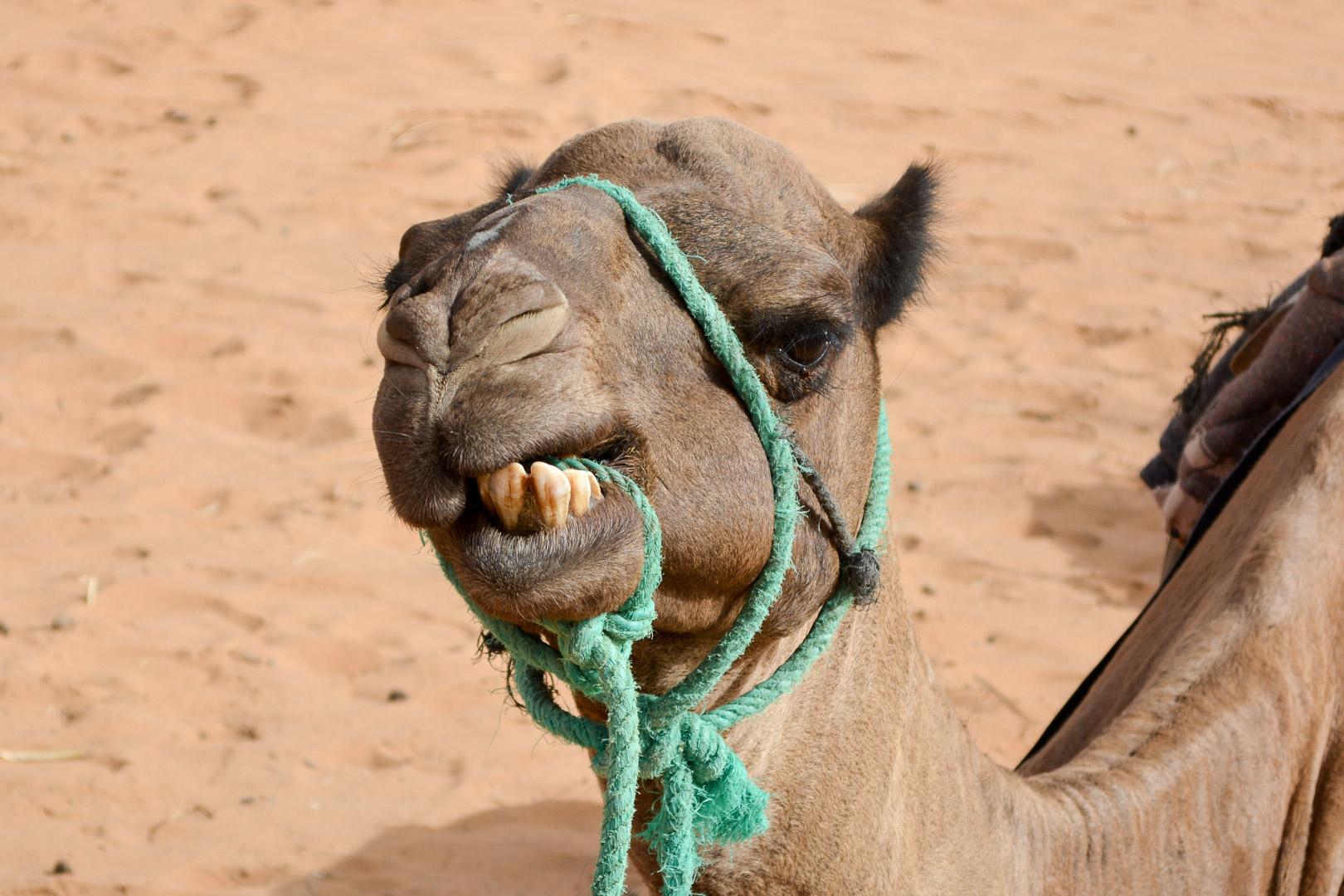 Moroccan Desert Tour