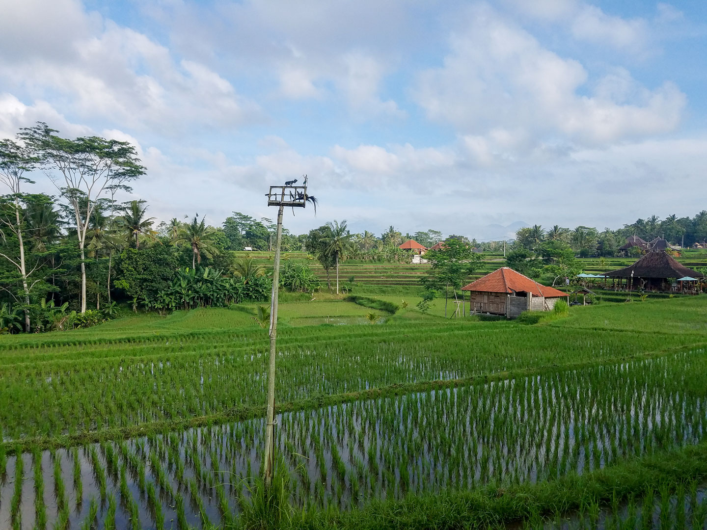 Rice paddies on the ridge walk