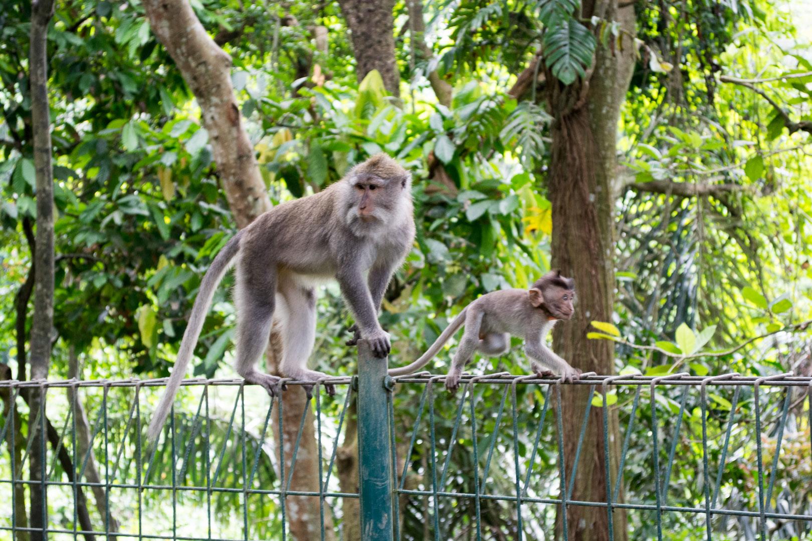 Baby monkey!!