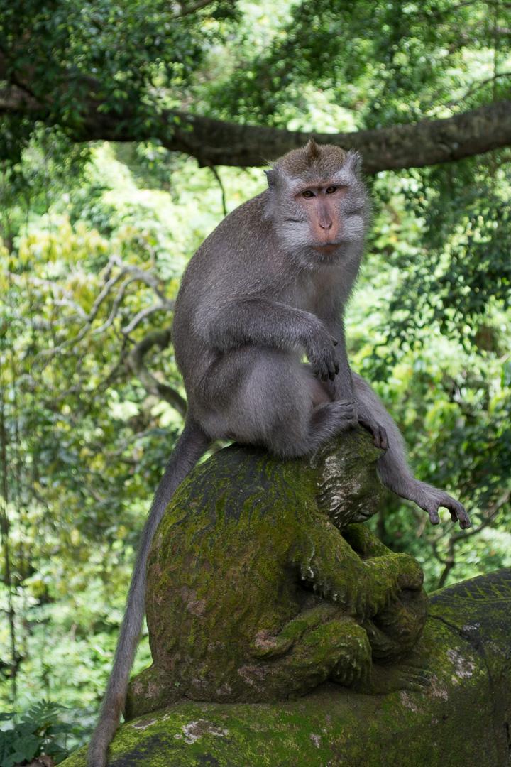 Monkey on a monkey?