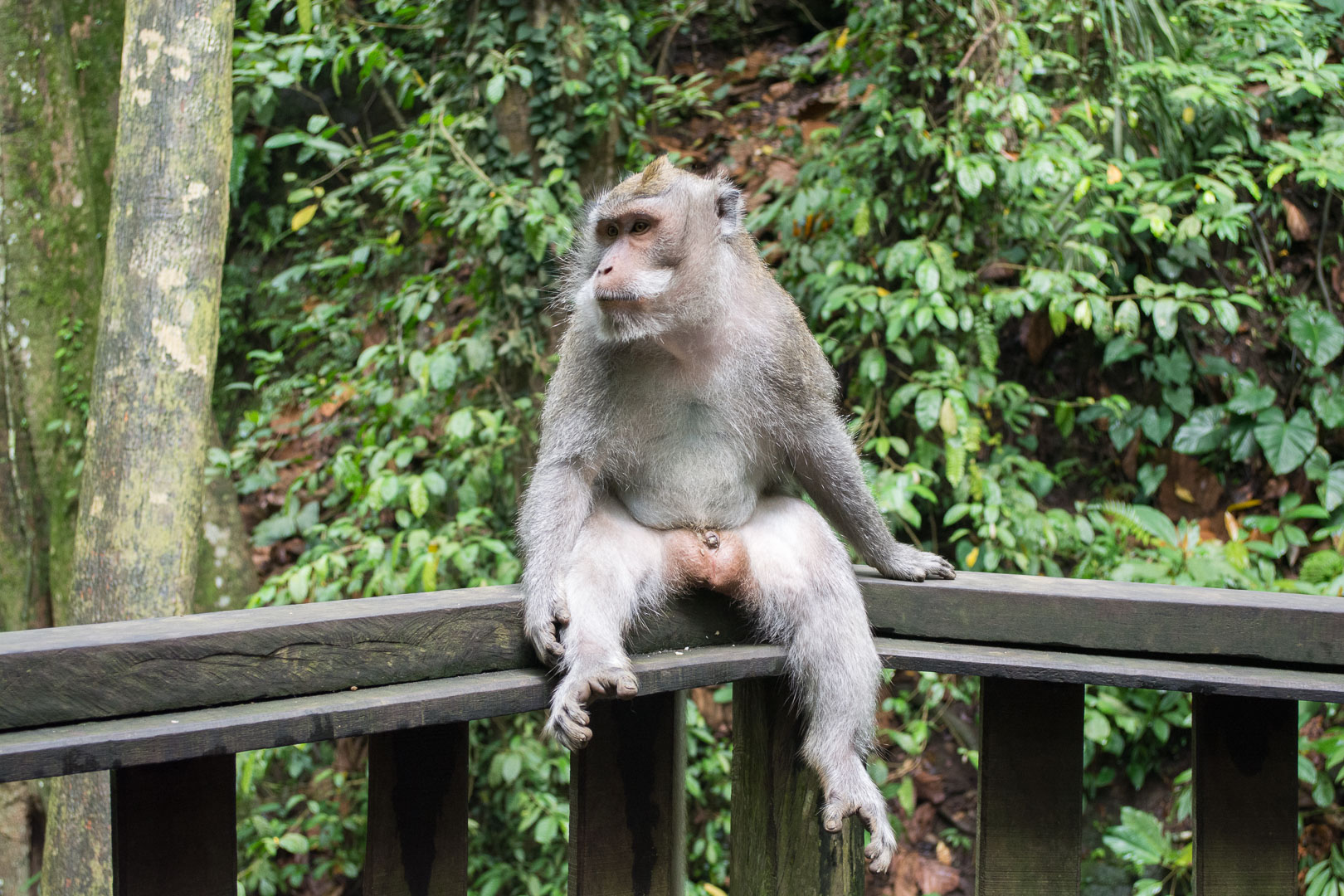 "My Insta famous monkey model. I imagine this post would have some sort of inspirational quote such as, ""Stop every now and then. Just stop and enjoy. Take a deep breath. Relax and take in the abundance of life."""