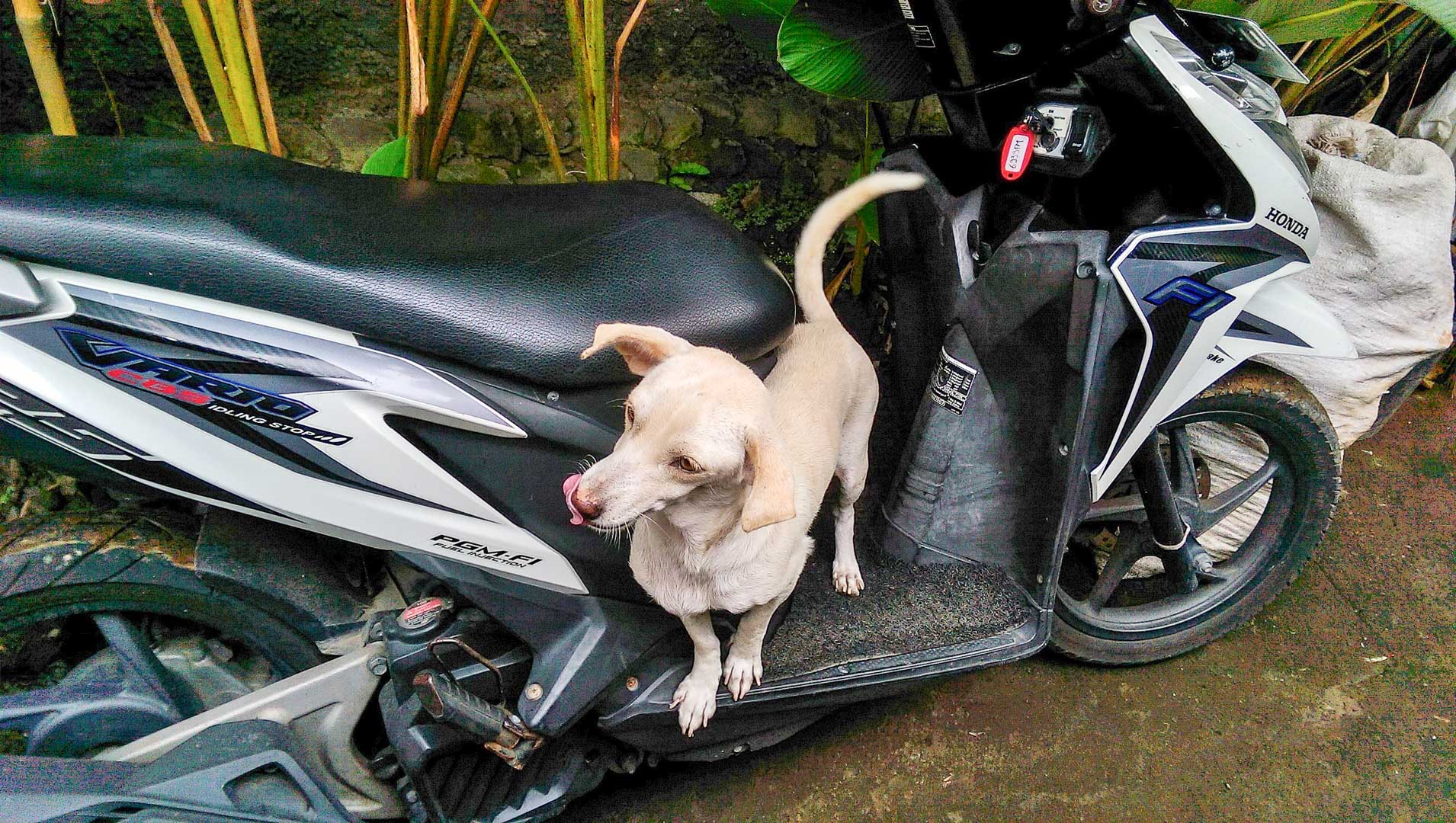Itchy hanging out on my scooter