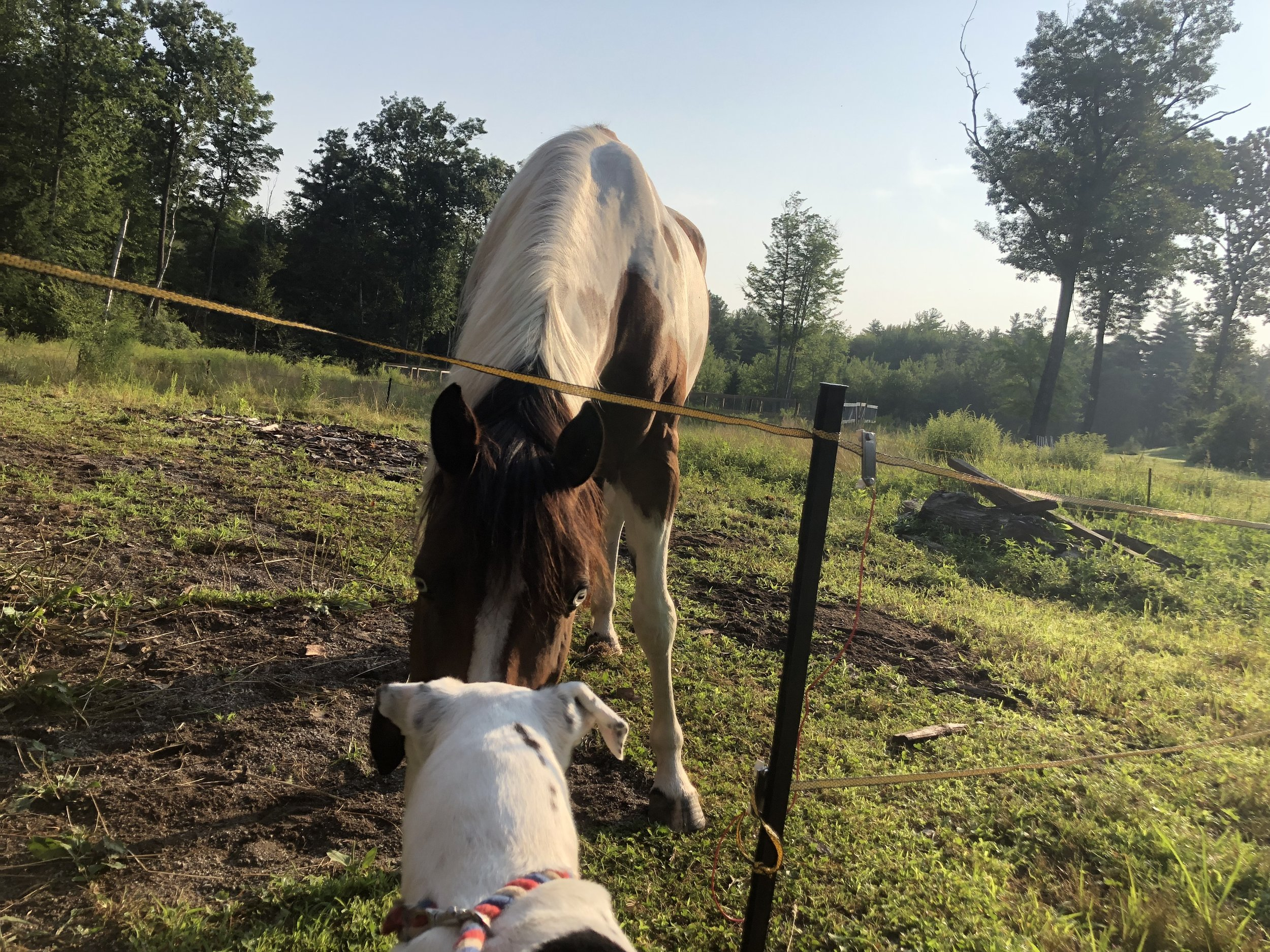 The Ranch Blog — Second Chance Ranch Rescue NH