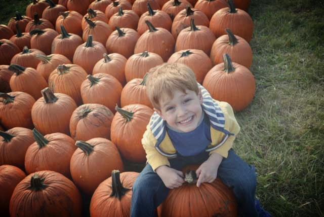 Pumpkin Patch at Marshall's Farmers Market, Eden Prairie MN