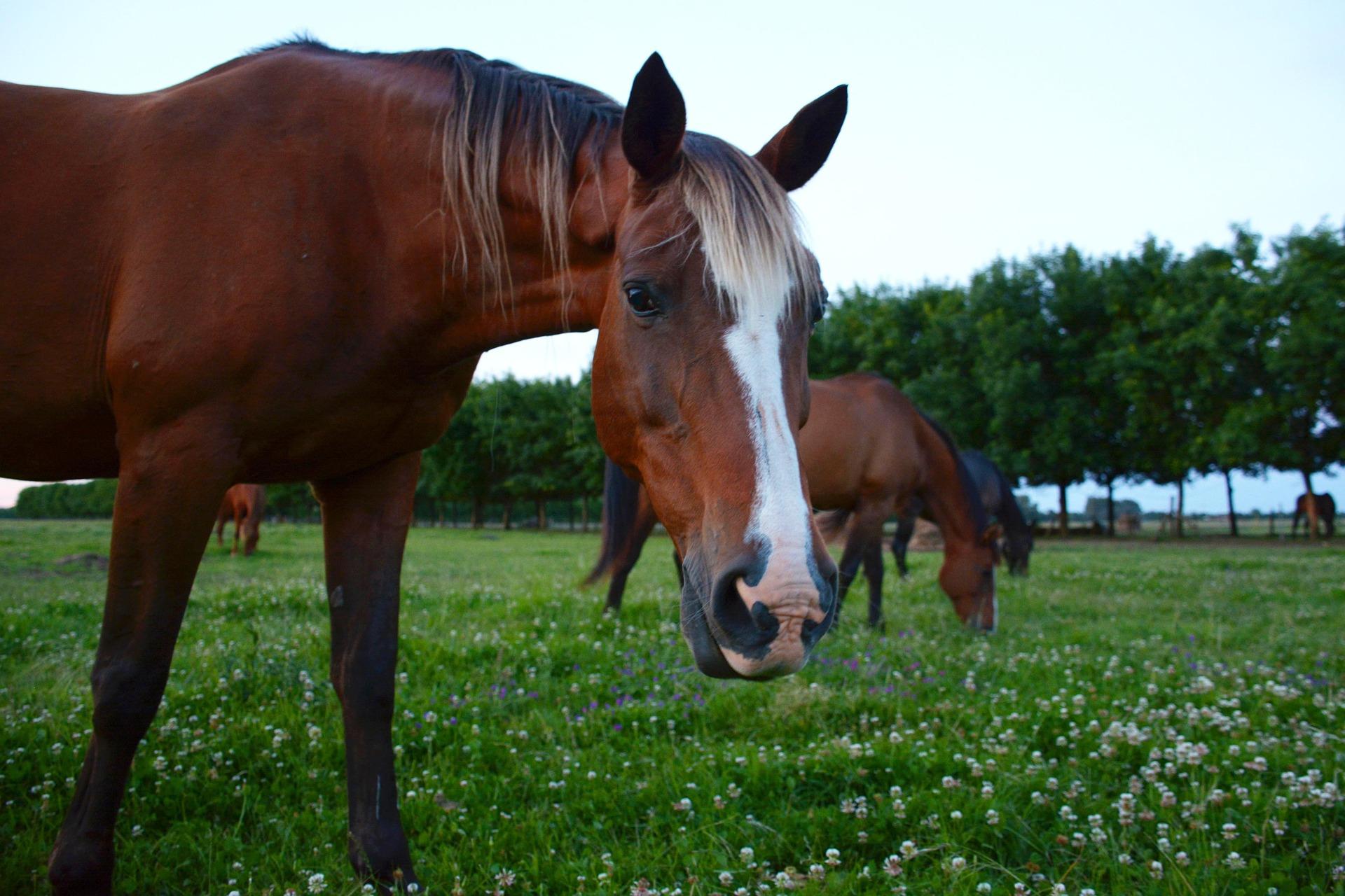 Farms 25 - 50 acres -