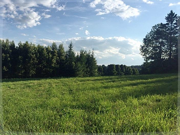 grassymeadow.jpg