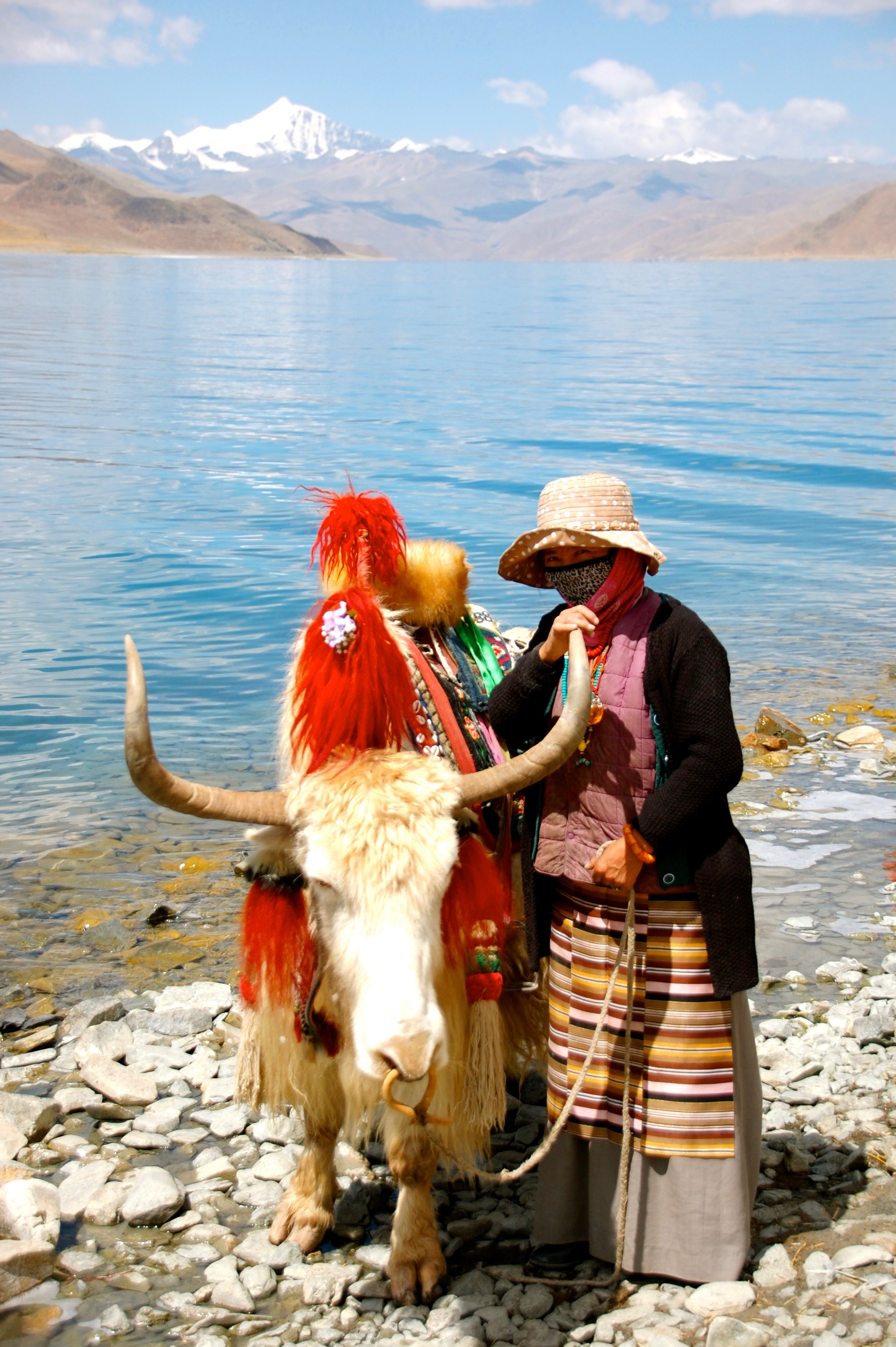 Colorfully adorned yak and handler at Yamdrok Tso Lake, the largest of the sacred lakes of Tibet at close to 45 miles long (Langkazi, Tibet)