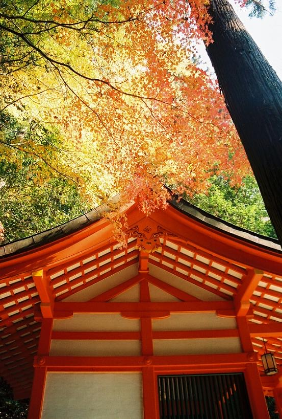Autumn leaves, mountain shrine (Mount Kurama, Kyoto)