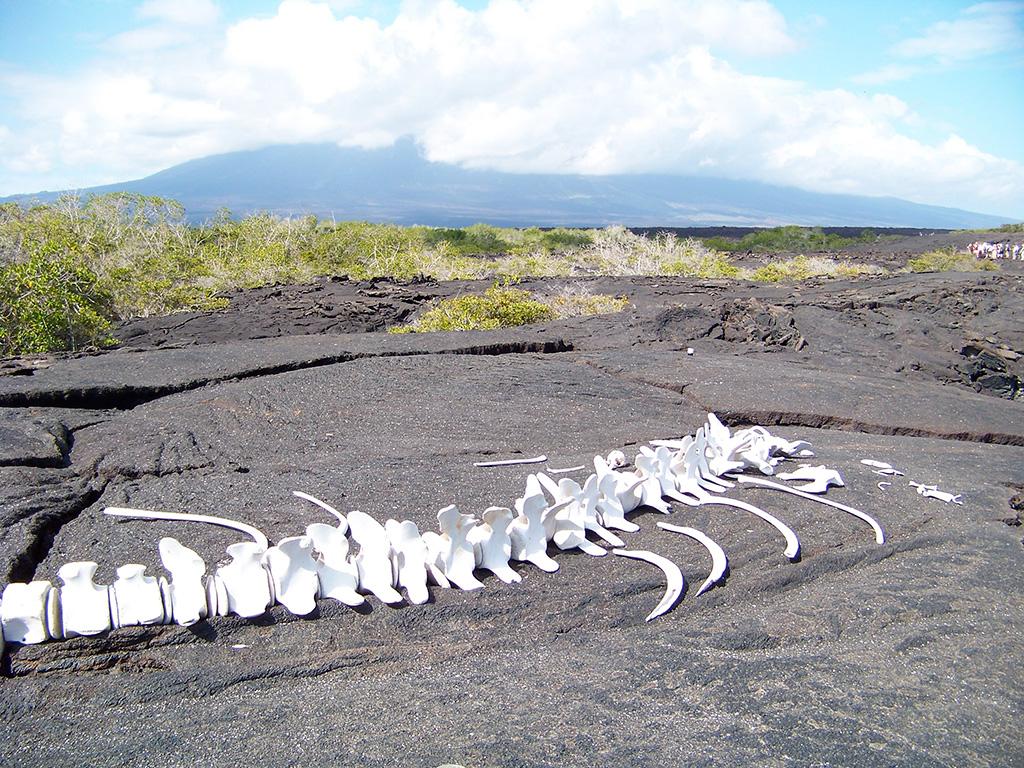 4.skeleton-galapagos.jpg