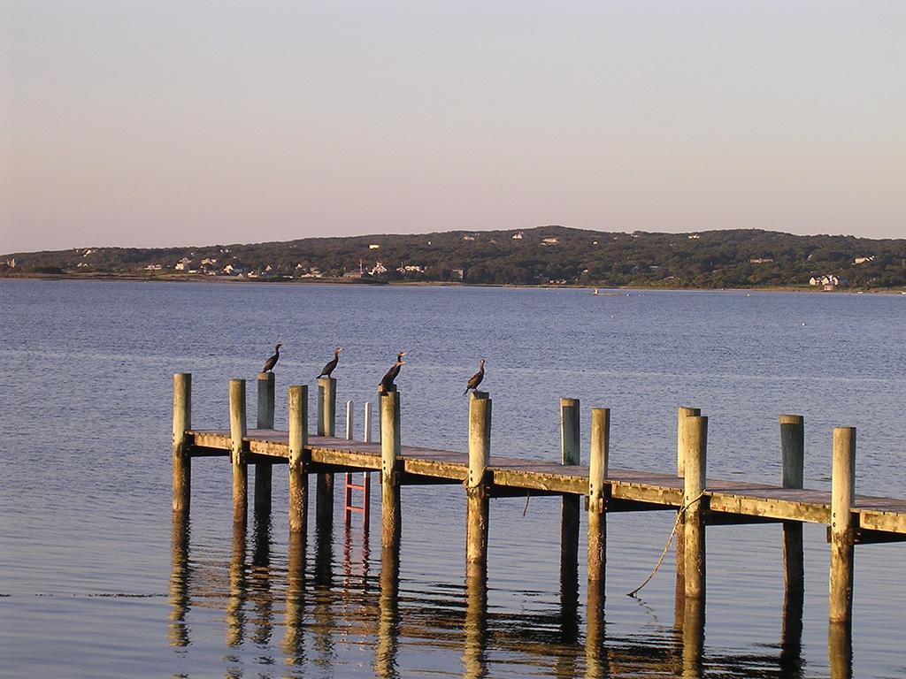 9.menemsha-pond-dock.jpg
