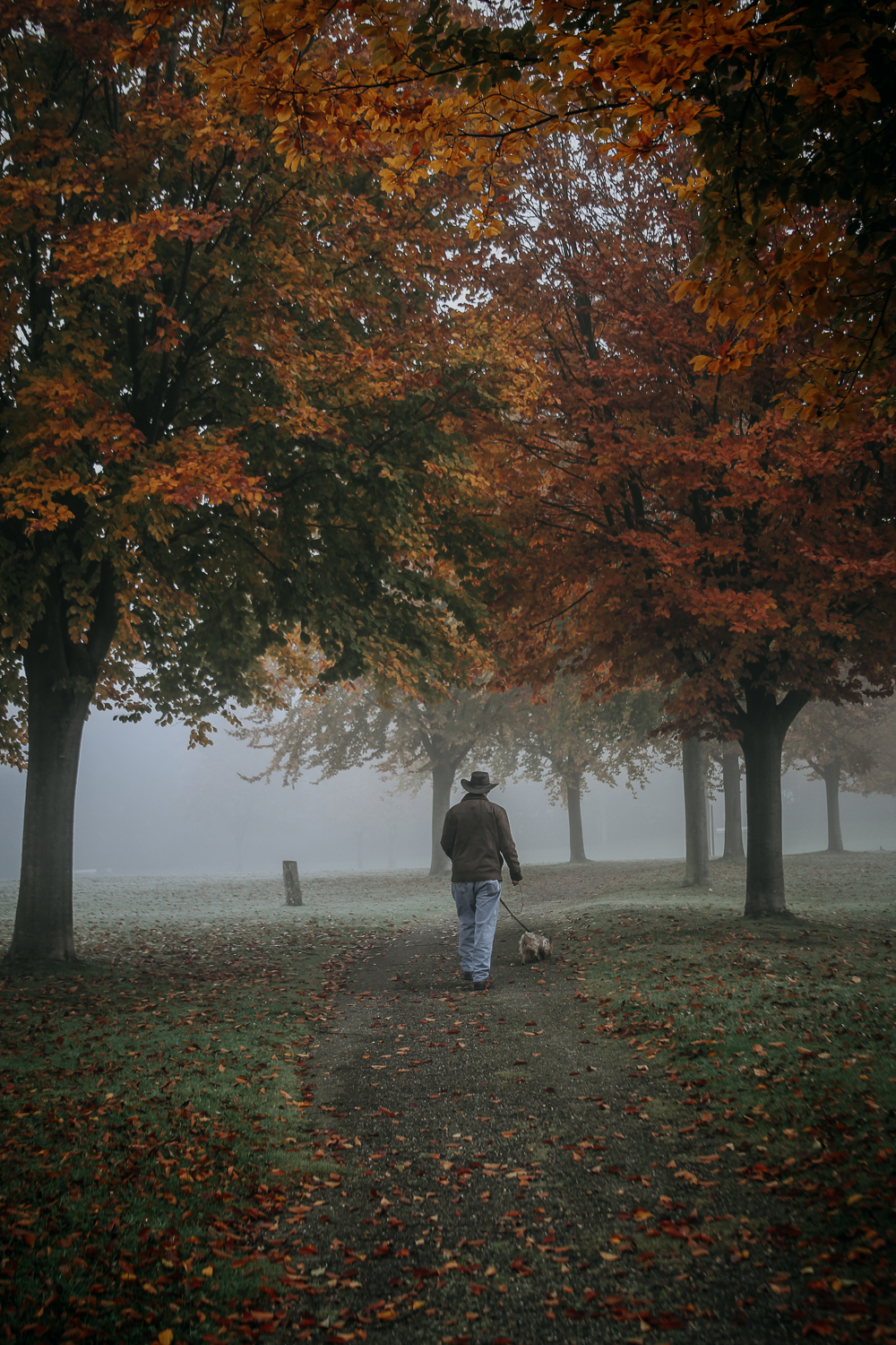 Walking To The Foggy Morning
