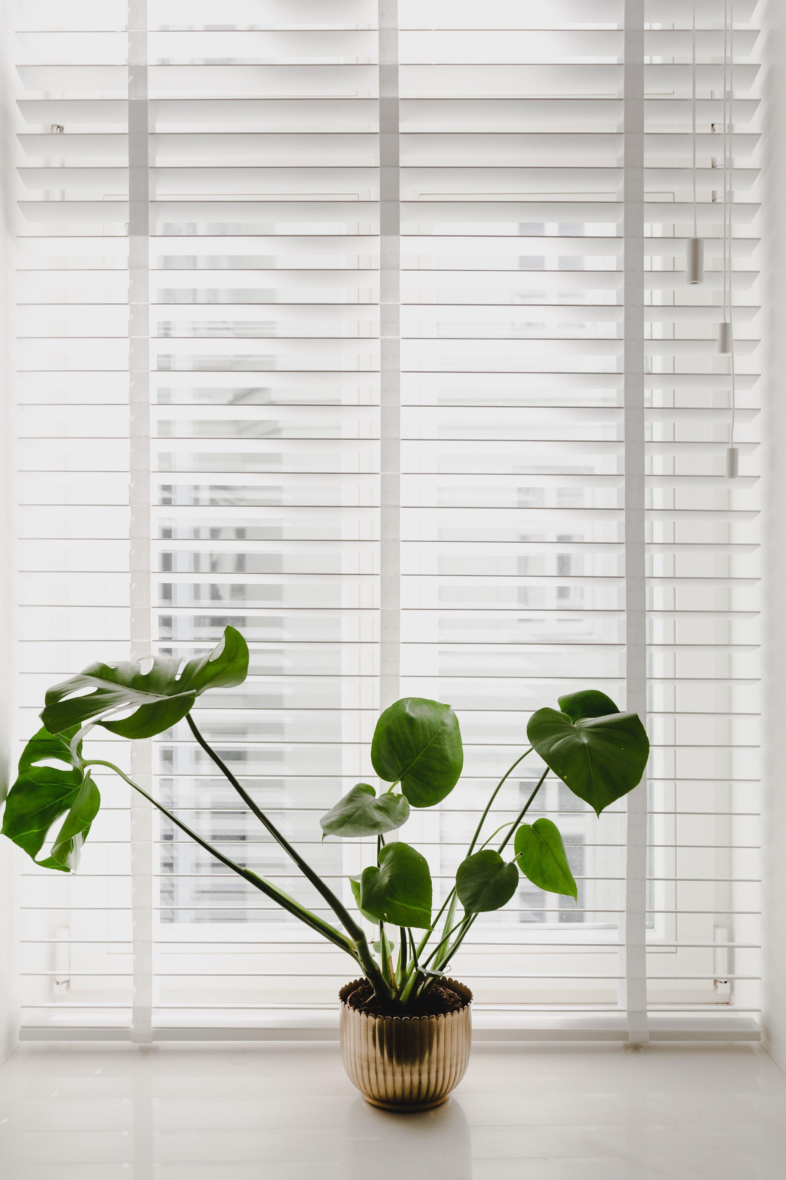 window treatments_19.jpg