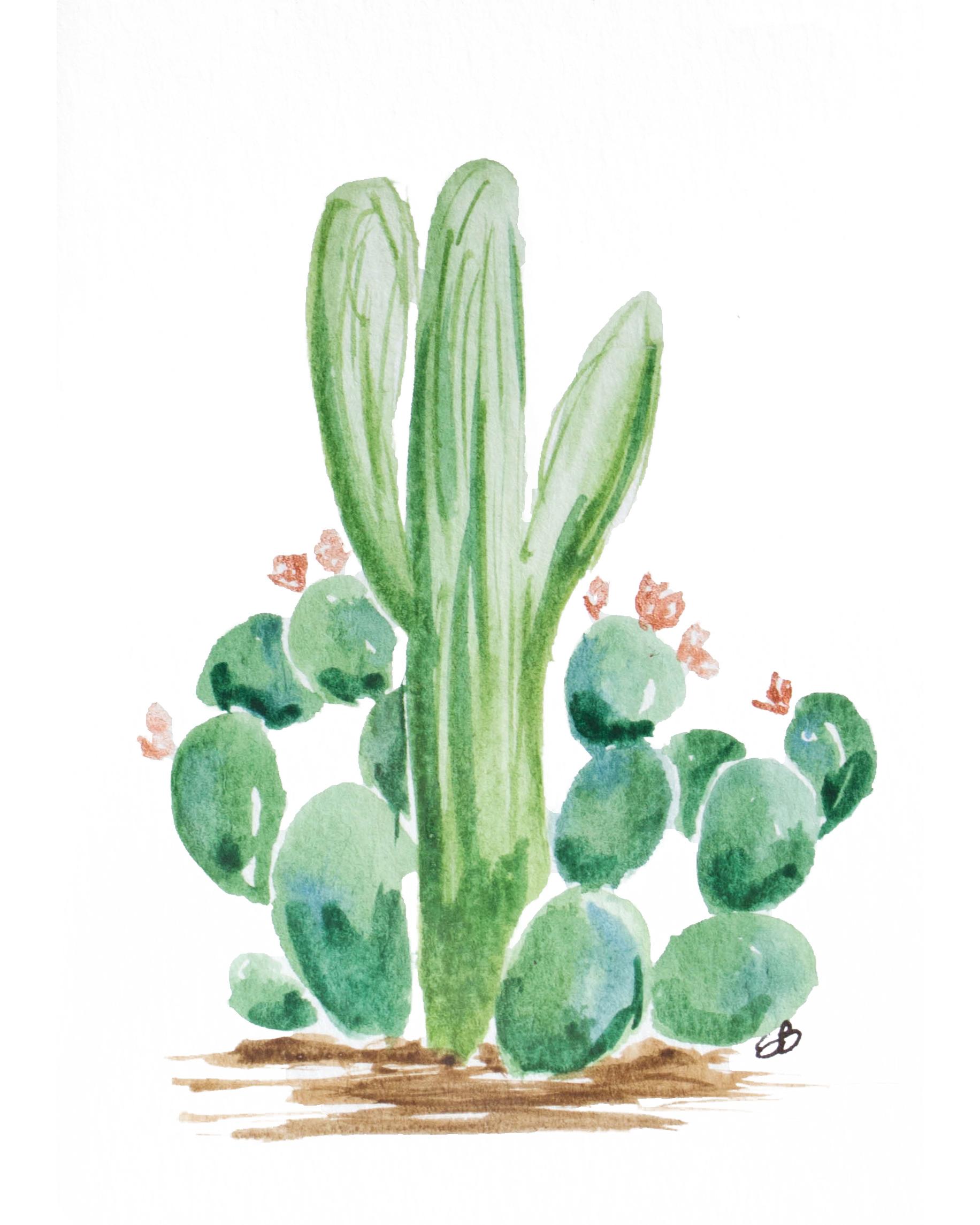 Cactus2_8x10.jpg