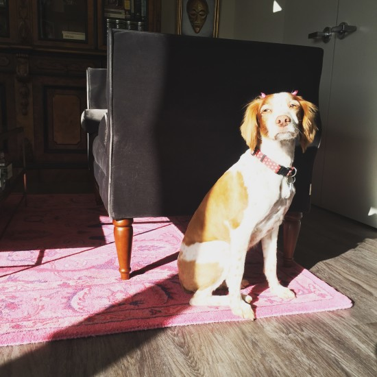 Photo: Nala catching some rare Seattle rays on the pink carpet.