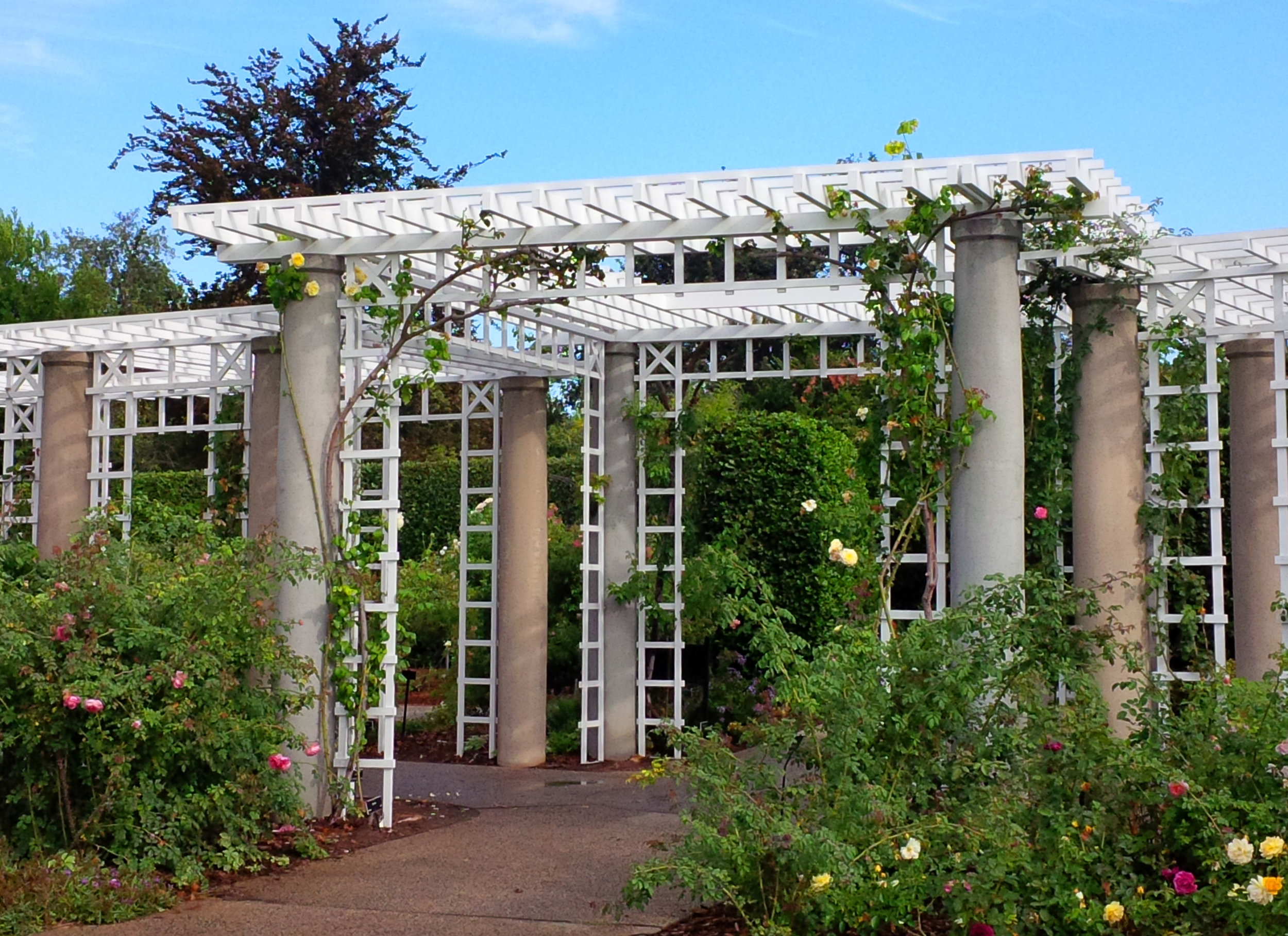 - The crossing area of the re-constructed trellis
