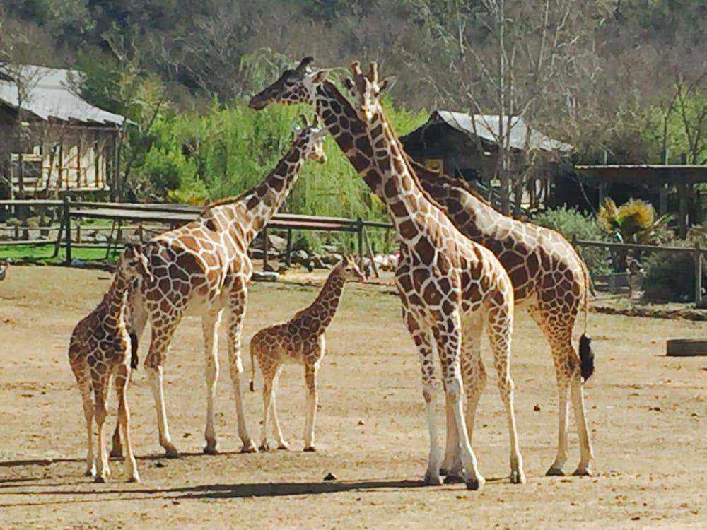 safariw.jpg