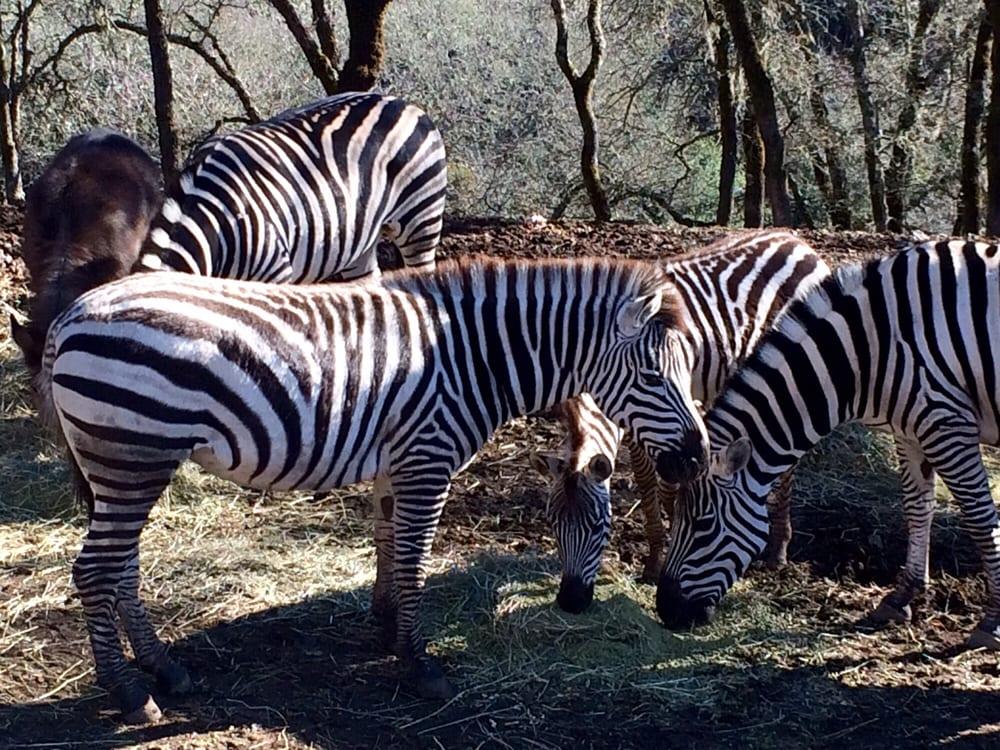 safariwe.jpg