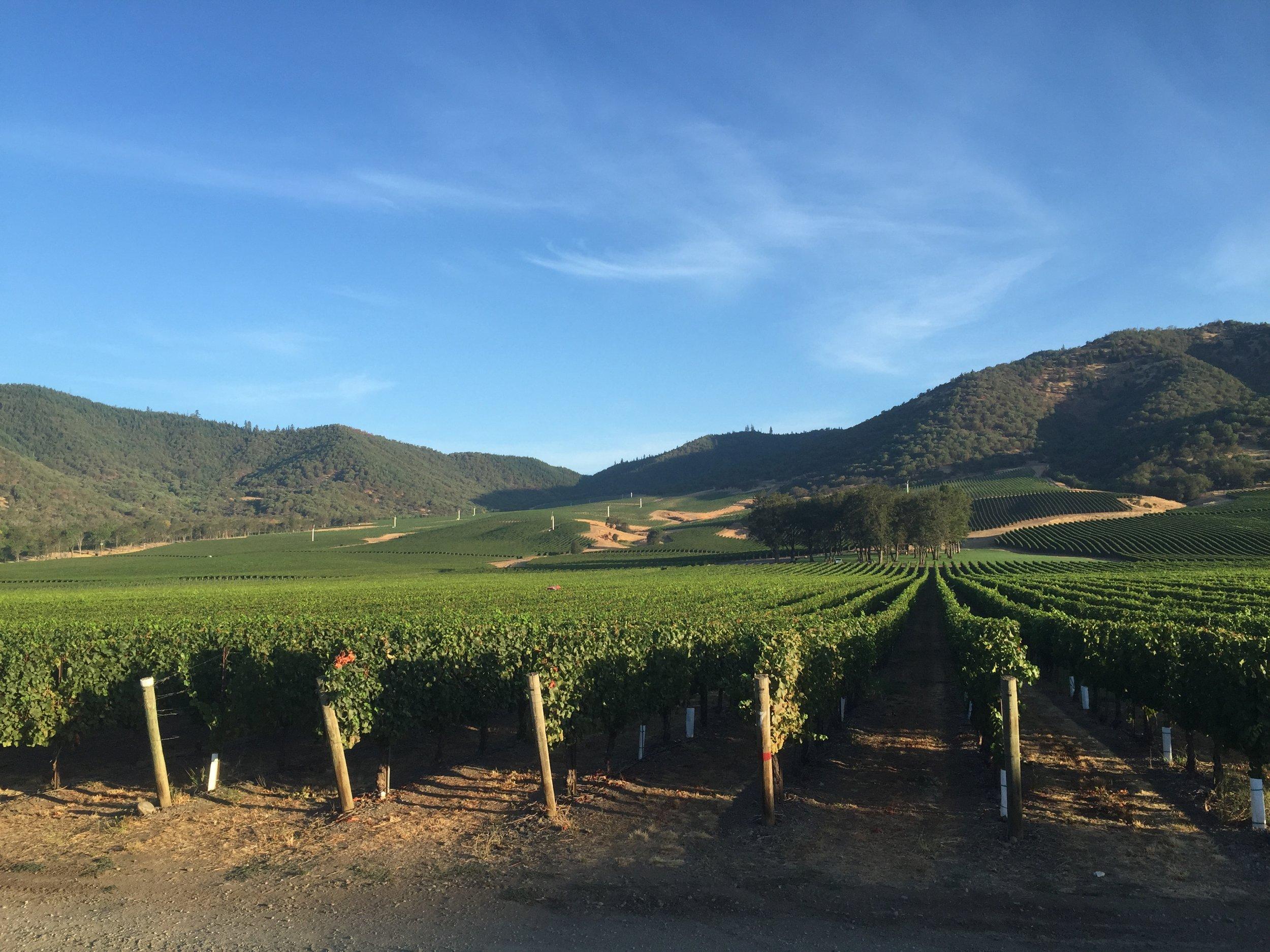 DelRio Vineyards