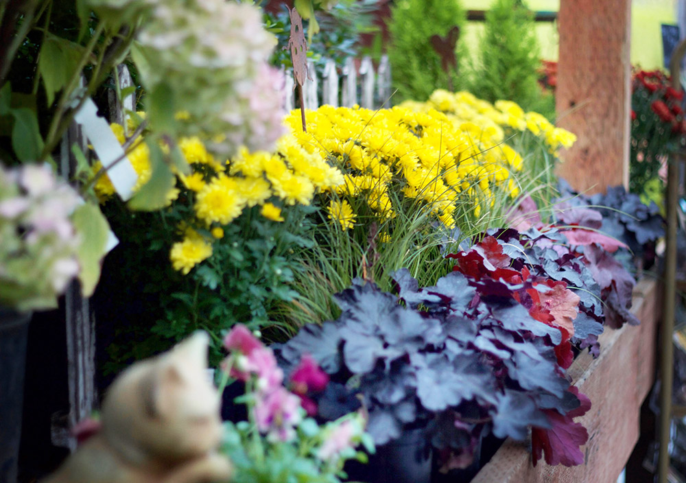 Seasonal color - is always finding its way onto our benches! Whether you are designing a new flower bed, or freshening up a container garden, you can find lots of inspiration and ideas when you visit Pine Creek Farms & Nursery.