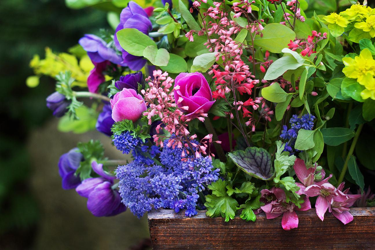 reduced foraged flowers & floliage spring anemone bulbs ss pc nursery cut flowers.jpg
