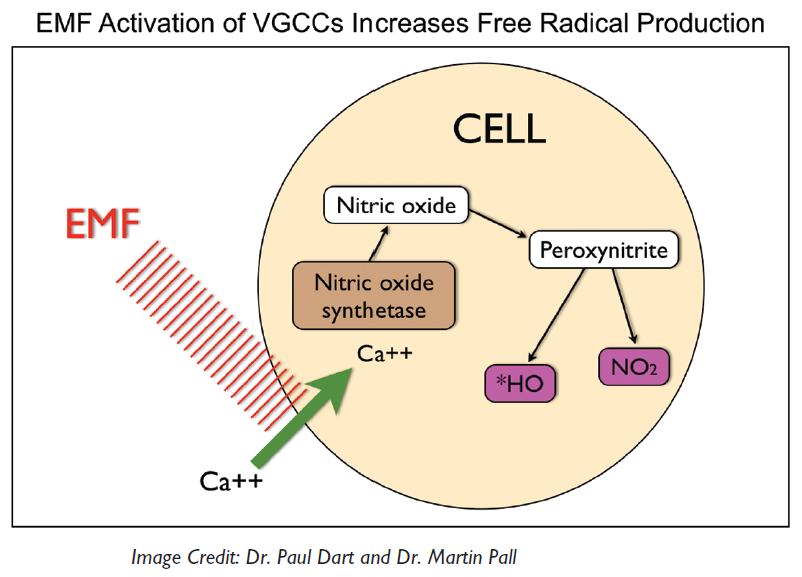 5G + nnEMFs: Research — Wilde At Heart