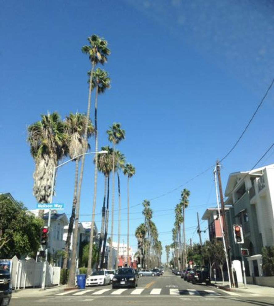 Those palmtrees!!! This is my city!!!!