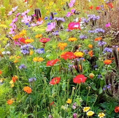 The Wildlife Meadow at @sherbornegirls is looking beautiful! As well as providing for wildlife, we hope that it inspires all those who walk past it, to work for a better world 🌎