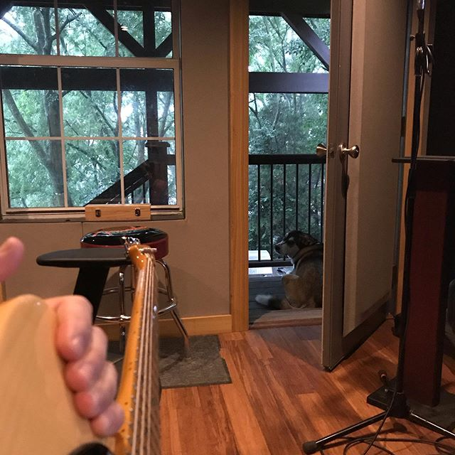 Morning time guitars featuring doggies watching rain. #nashville #producer #tvfilm #wishitwasntsomuggy