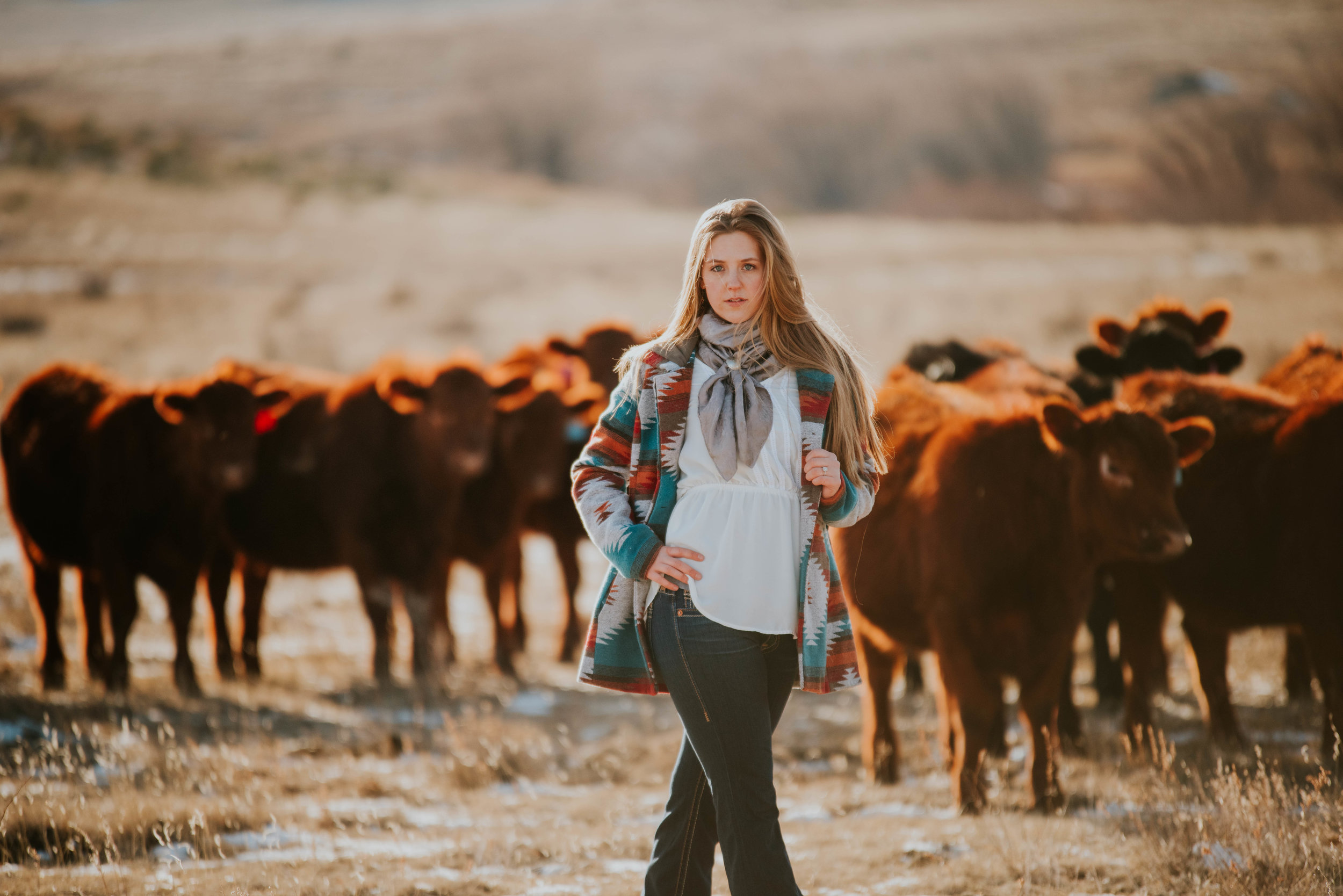 Miss. Miller's Photography | Photos with cattle | Colorado Photographer | Western Photographer | Cattle Ranching