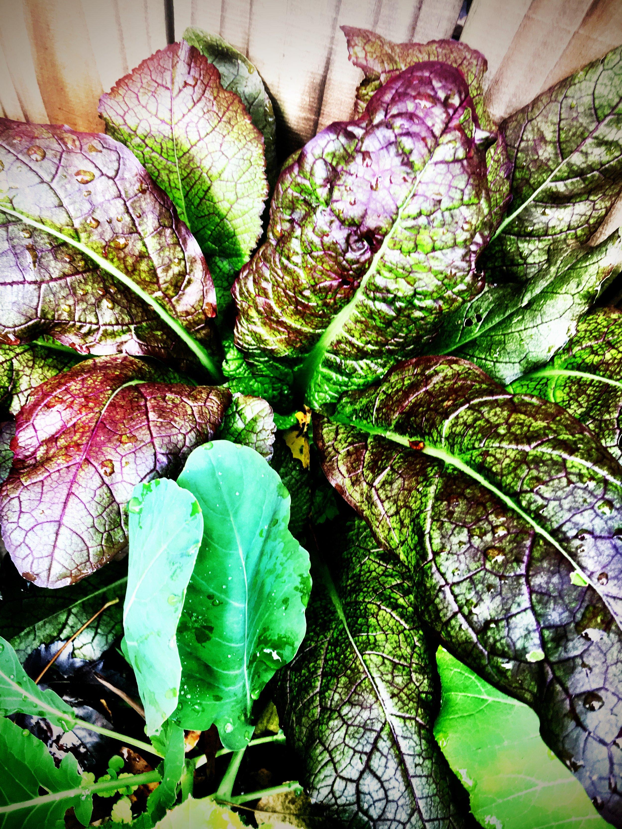 Leaf in Garden.jpg