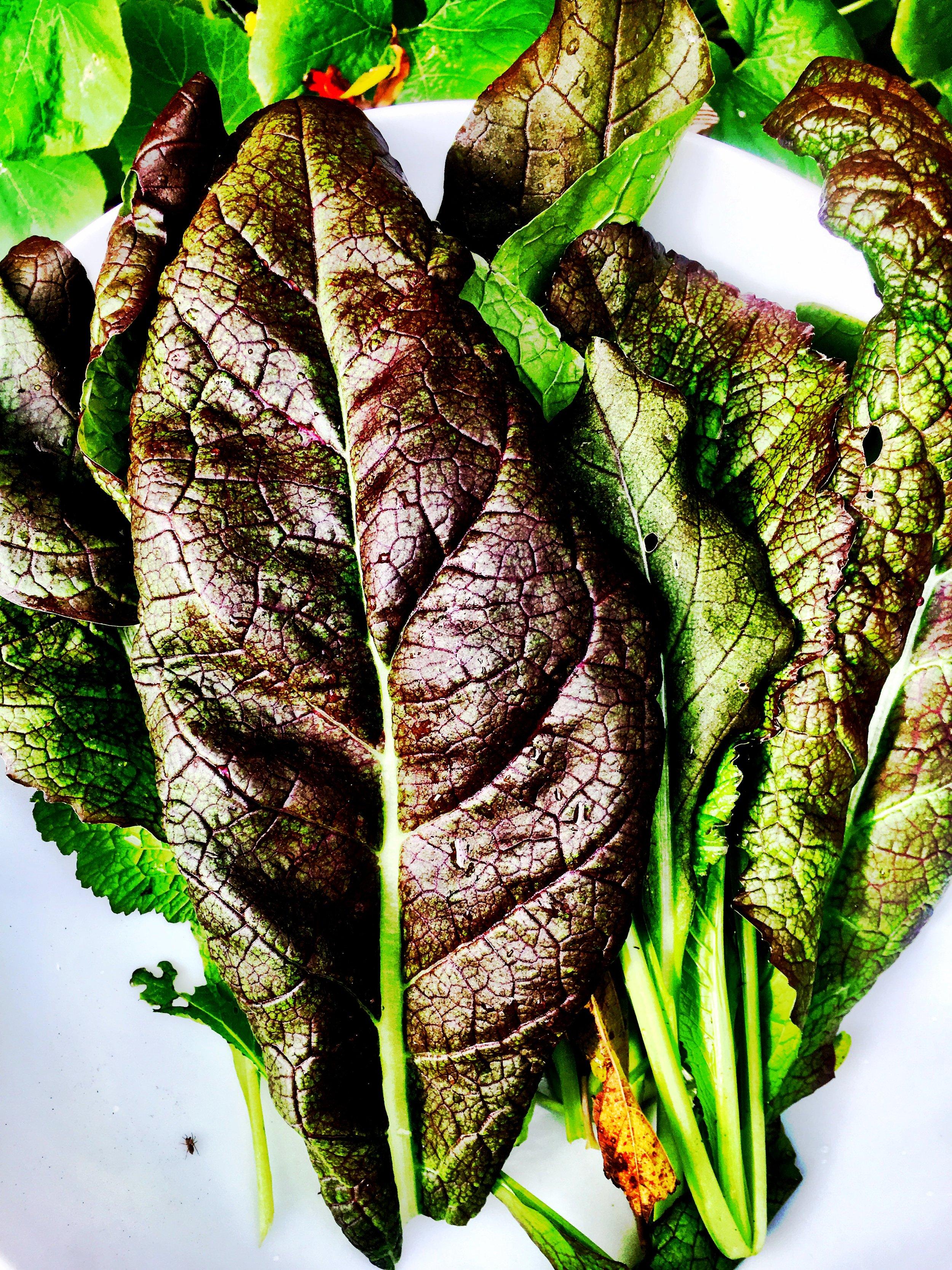 Leaf II.jpg