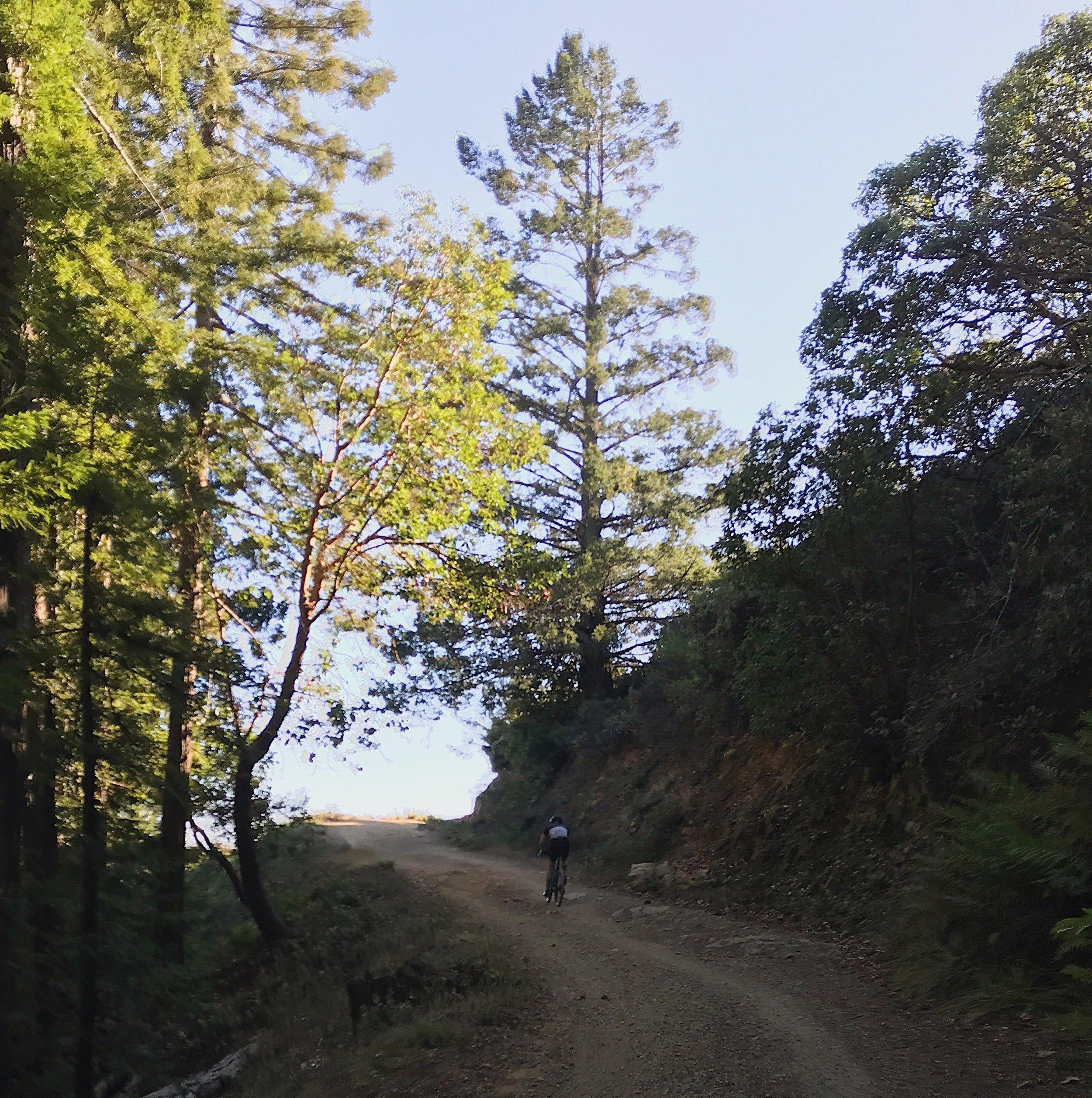 Gravel Climb Mt. Tam