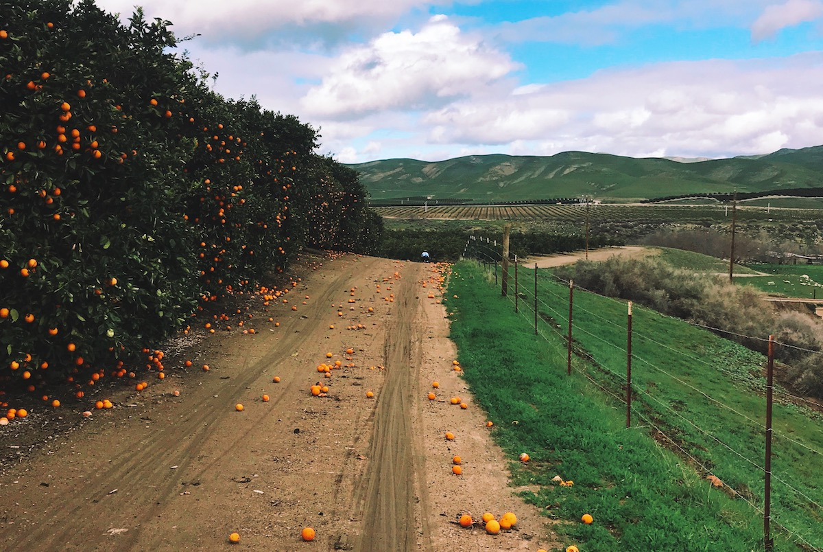 The dreaded orchard section would bring many riders to a full stop