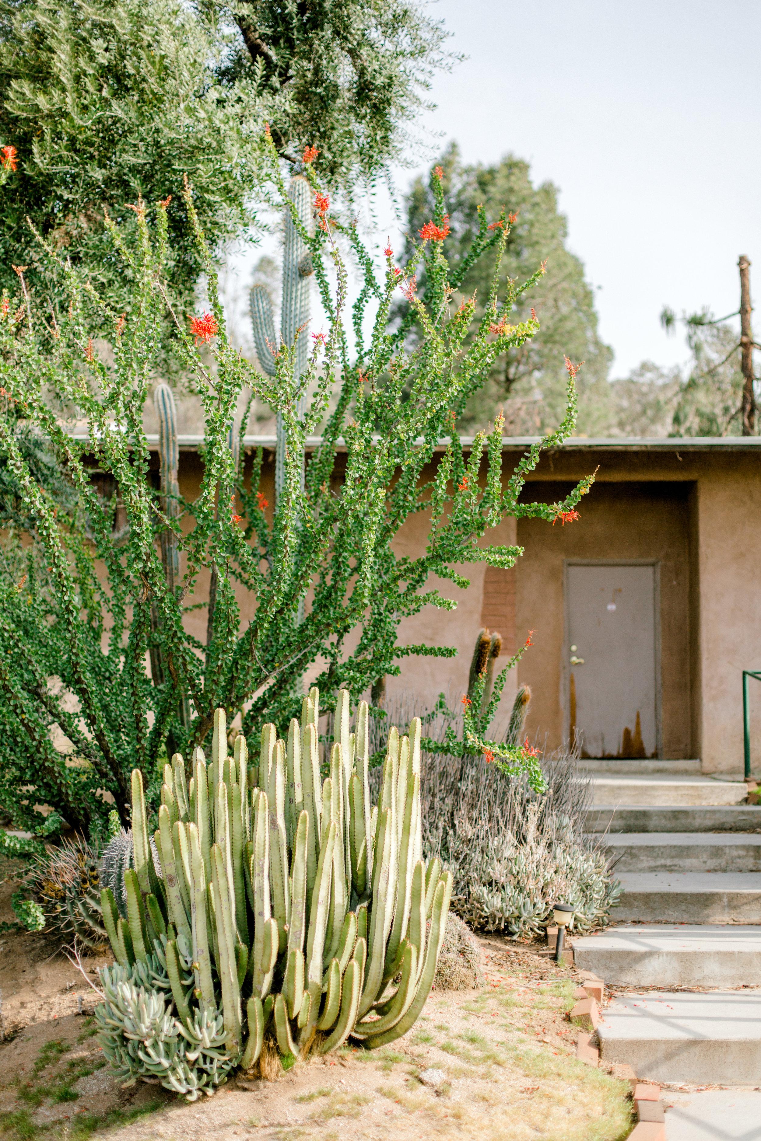 Jessica Sgubin Photography Atlanta Portrait photographer los angeles la salvation mountain greenhouse cactus garden moorten botanical garden cabazon dinosaurs santa monica joshua tree-8.jpg