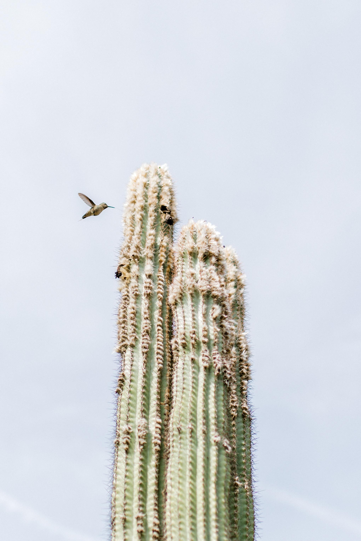Jessica Sgubin Photography Atlanta Portrait photographer los angeles la salvation mountain greenhouse cactus garden moorten botanical garden cabazon dinosaurs santa monica joshua tree-19.jpg